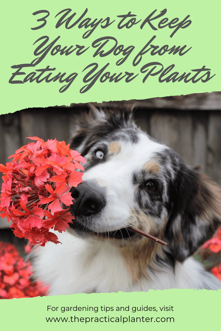 3 Simple Ways to Keep Your Dog from Eating Your Plants