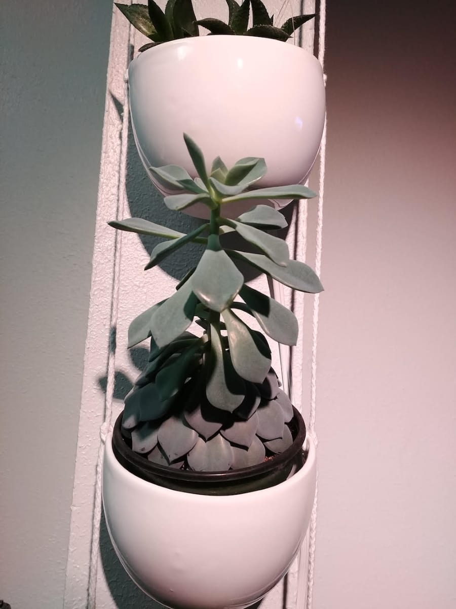 Succulents in Wall Planter