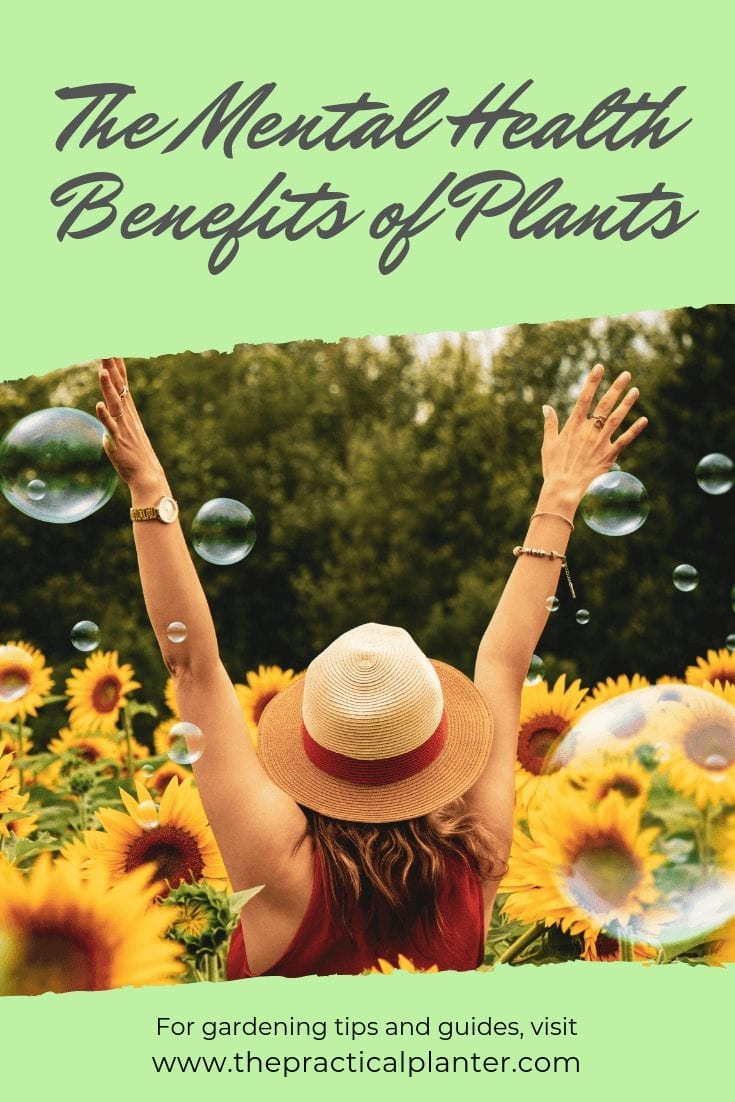 The Amazing Benefits Plants Have on Mental Health