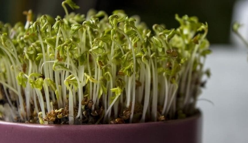 Growning Plants in Artificial Light
