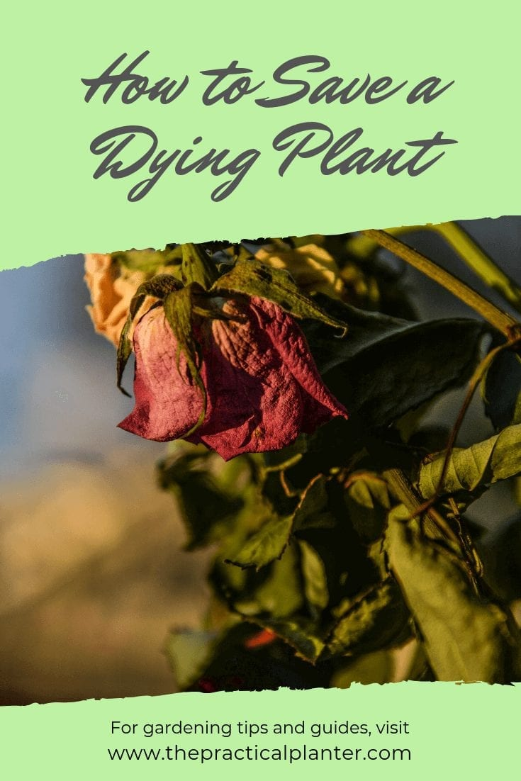 How to Save a Dying Plant from These 5 Diseases