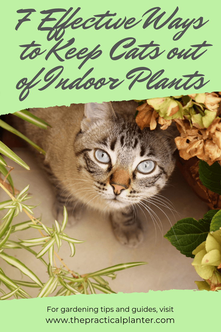 7 Effective Ways to Keep Cats out of Indoor Plants