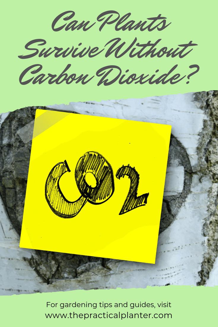 Can Plants Survive Without Carbon Dioxide