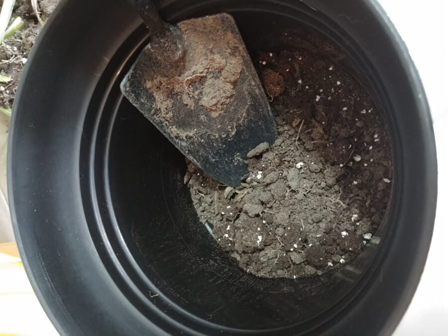 Add Soil to Bottom of Pot
