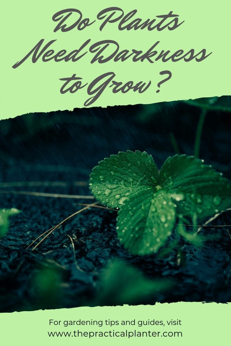 Do Plants Need Darkness to Grow