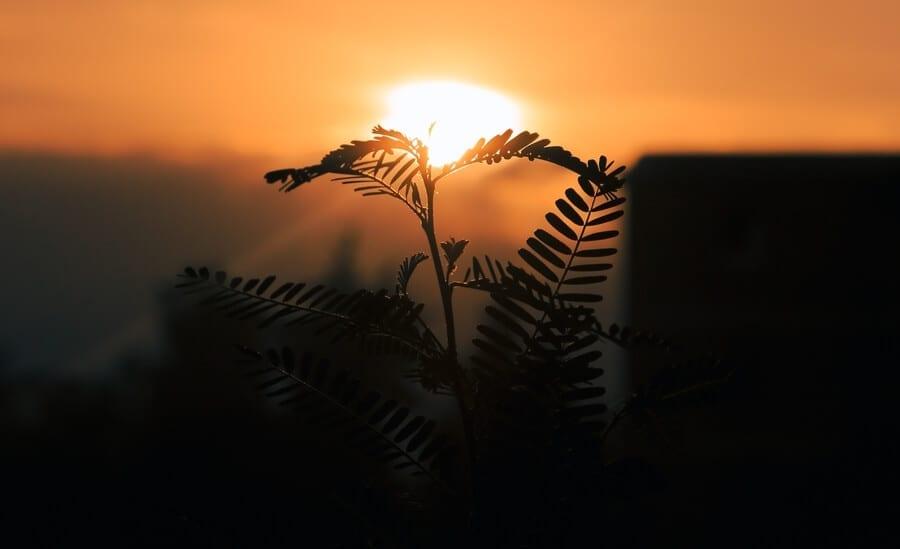 Do Plants Need Darkness?
