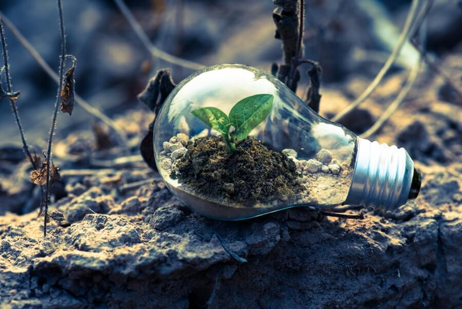 Growing Plants with Artificial Light