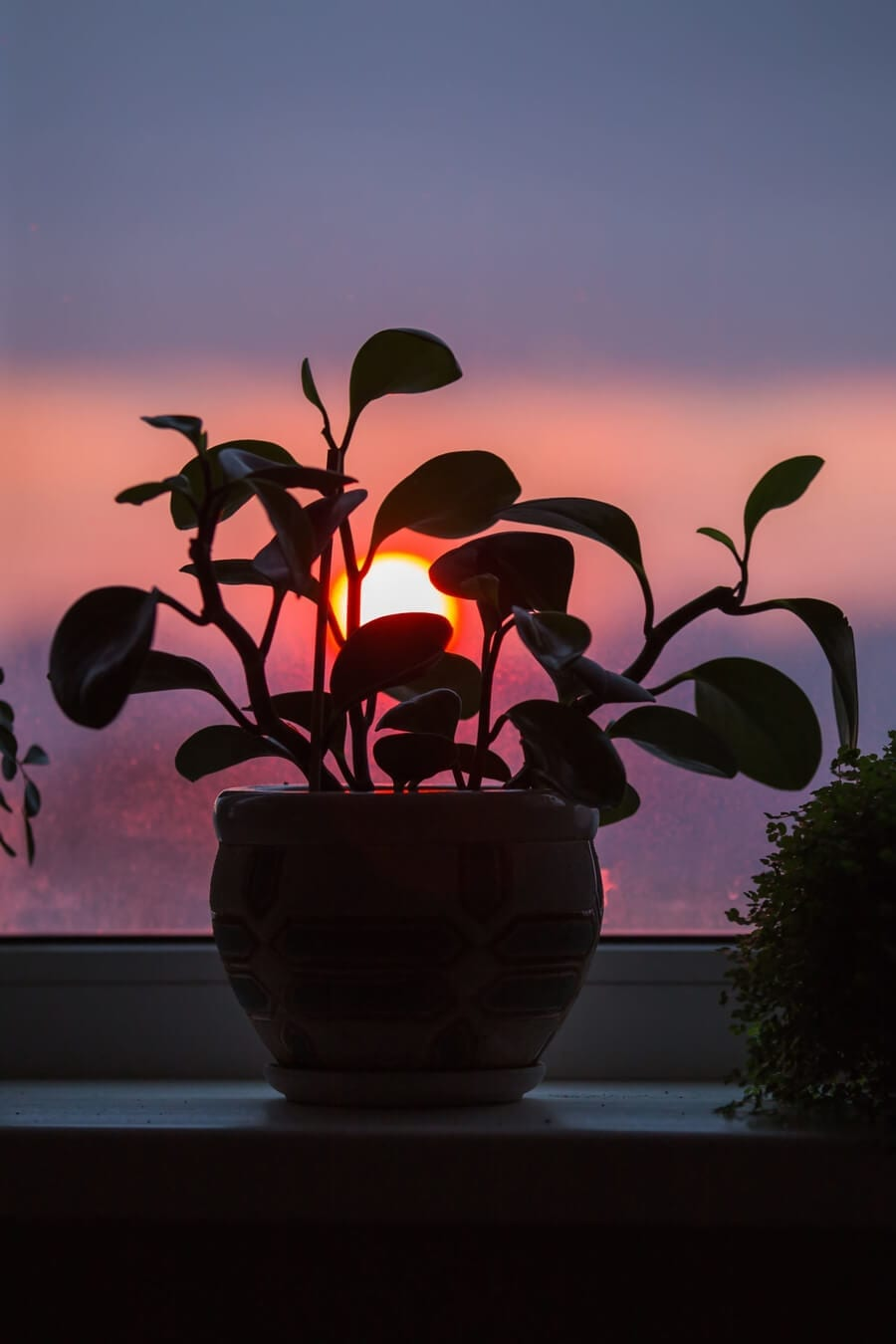 House Plant At Sunset