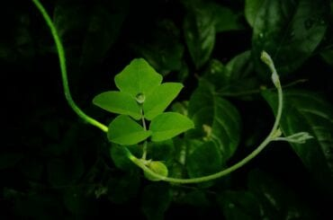 Plant in Darkness