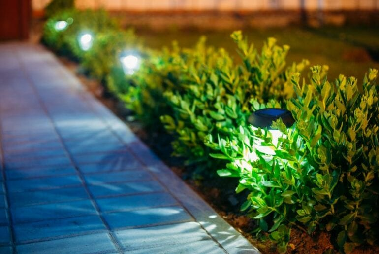 Plants at Night Near Solar Lights