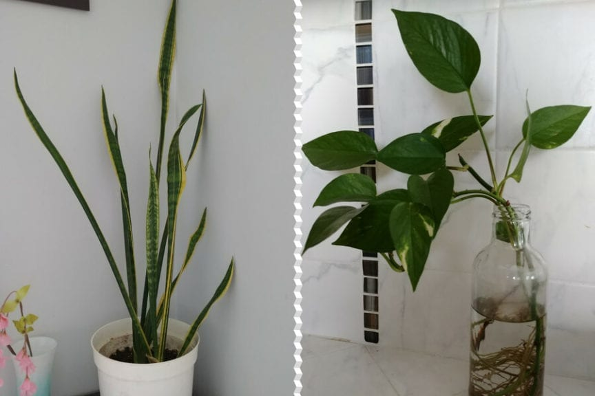 15 Best Indoor Plants That Thrive In Low Light Environments The