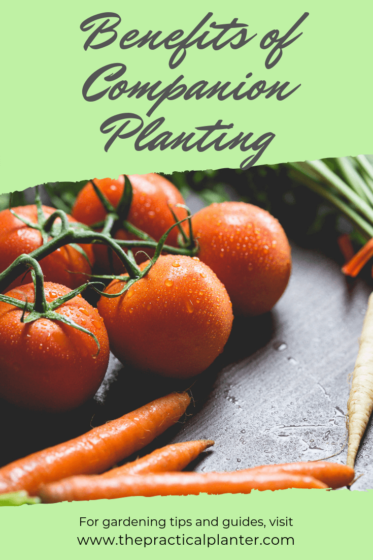 Must-Know Benefits of Companion Planting