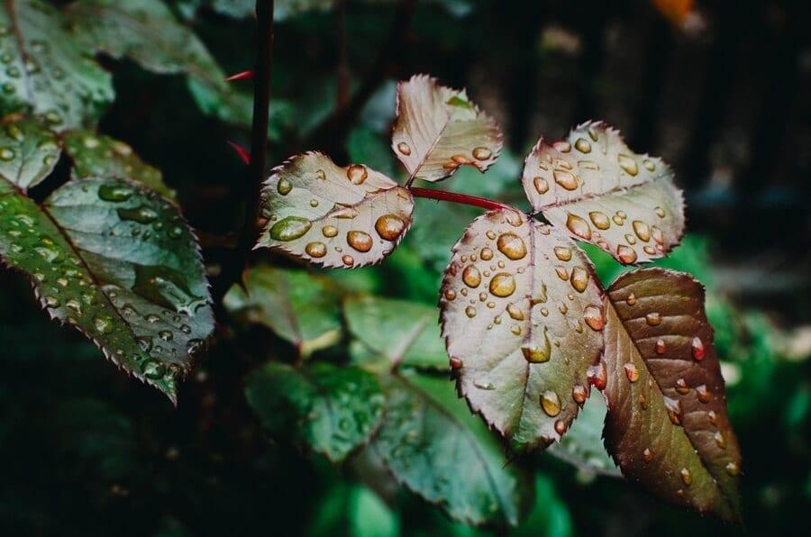 Plant in Rain