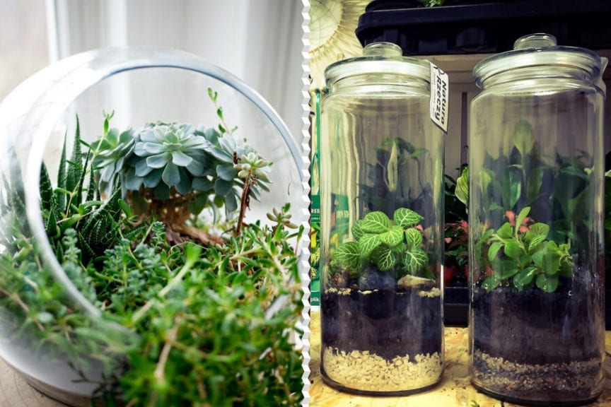 Your One Stop Terrarium Guide All You Need To Know The