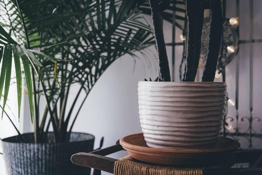 Tools for Indoor Gardening