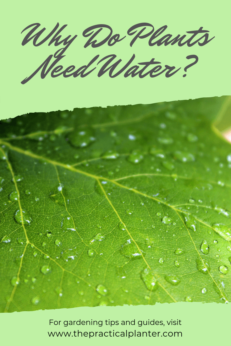 Why Do Plants Need Water #1 FAQ of 7 Plant Watering FAQs