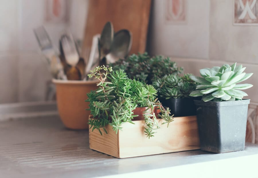 Succulents In The Kitchen