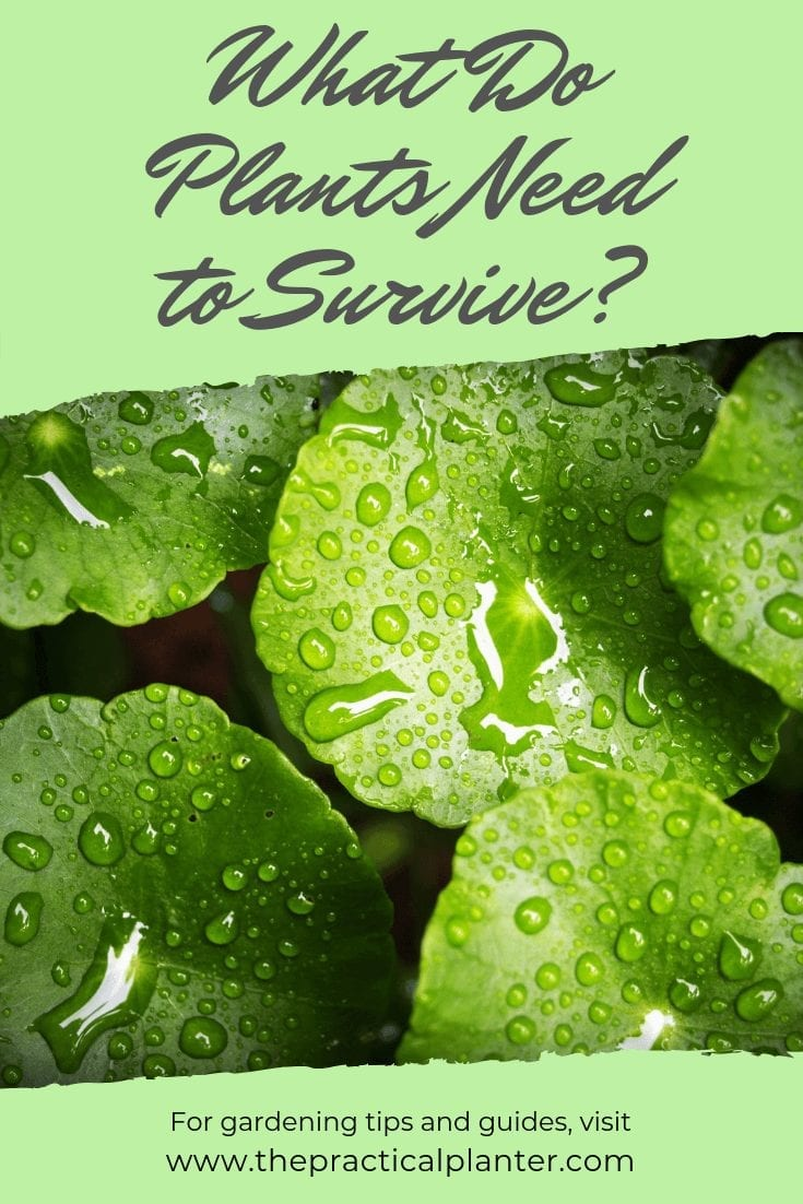 What Do Plants Need to Survive (And Thrive)