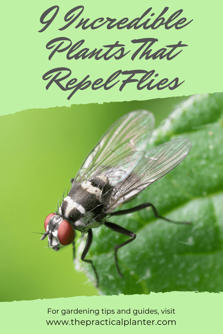 9 Incredible Plants That Repel Flies (No Need for Chemicals)