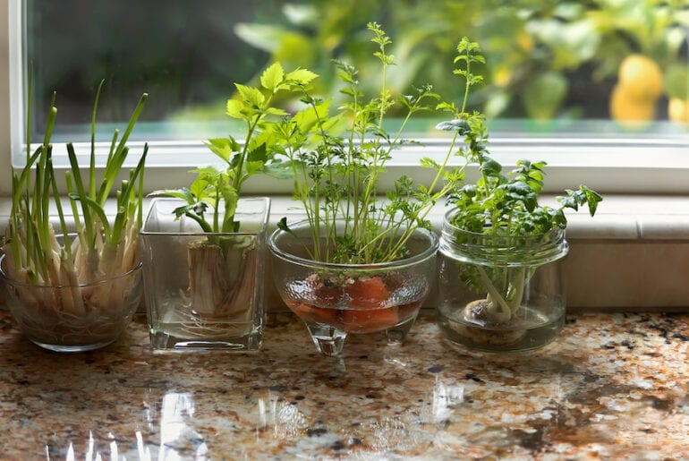 Re-Growing Vegetables Indoors