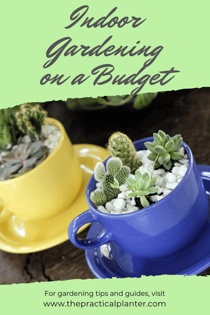Indoor Gardening on a Budget (Simple Ways to Save)
