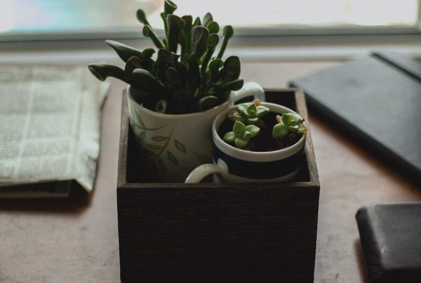 Indoor Plants in Coffee Mugs
