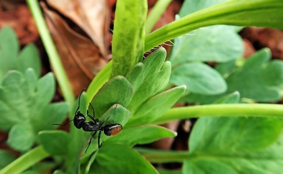 Plants That Repel Ants