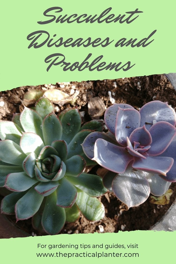 Succulent Diseases and Problems Solutions to Your Plant's Symptoms