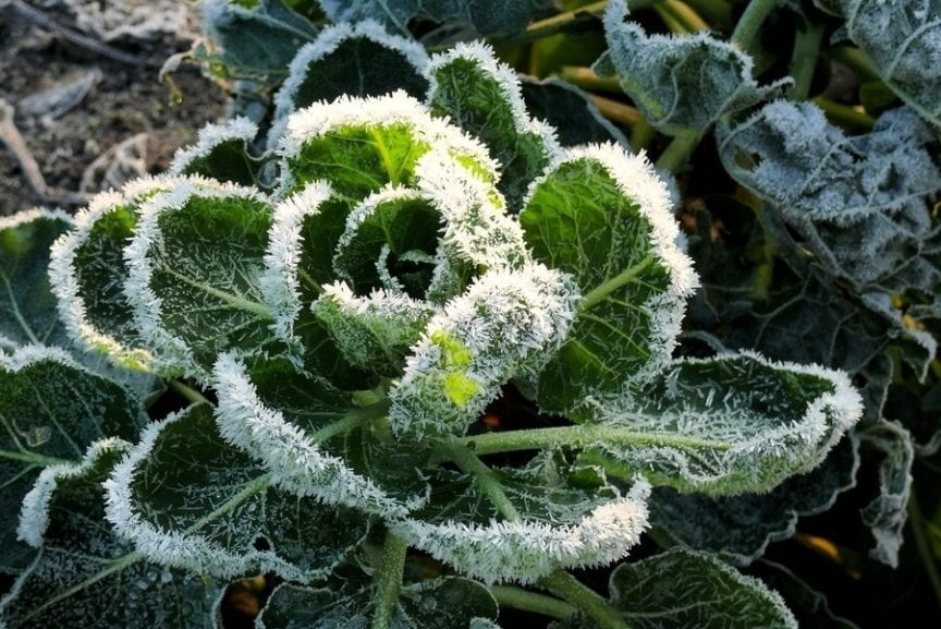 How To Garden In The Winter Cold Weather Gardening Tips The