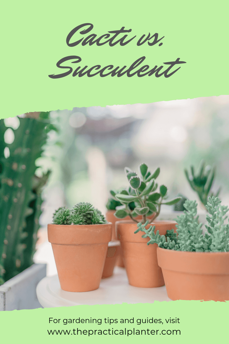 Are All Succulents Cacti (And How to Tell Them Apart)