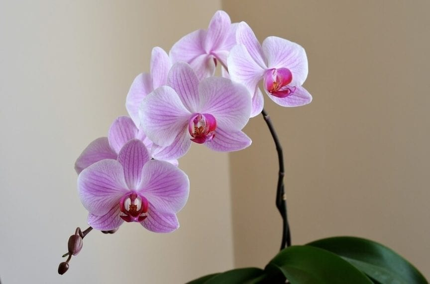 How To Properly Care For An Orchid After Flowering The Practical
