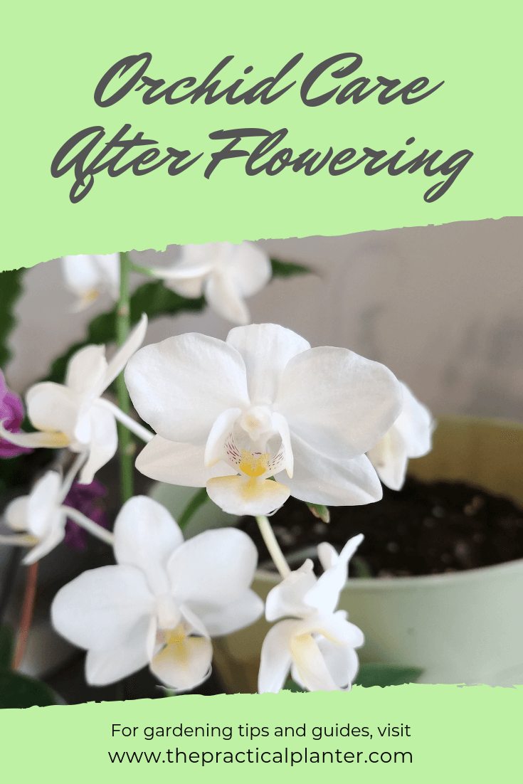 How to Properly Care for an Orchid After Flowering