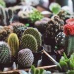 Succulents Indoor