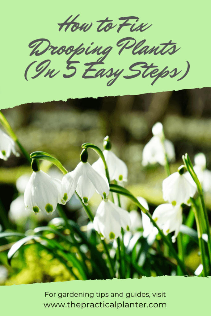 How to Fix Drooping Plants (In 5 Easy Steps)