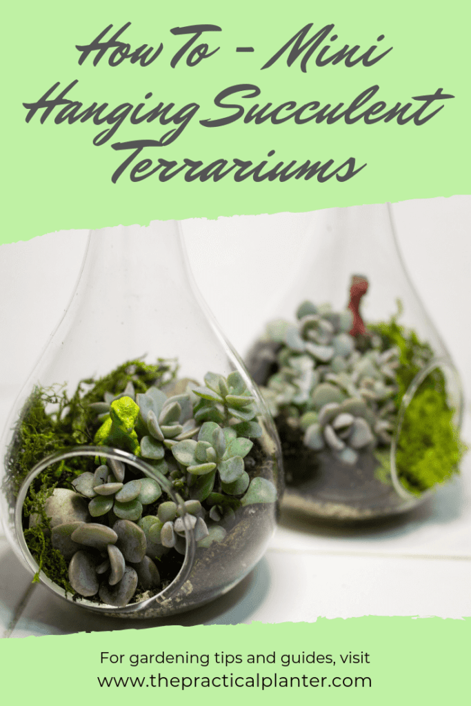 How To Make Your Own Mini Hanging Succulent Terrarium The Practical Planter