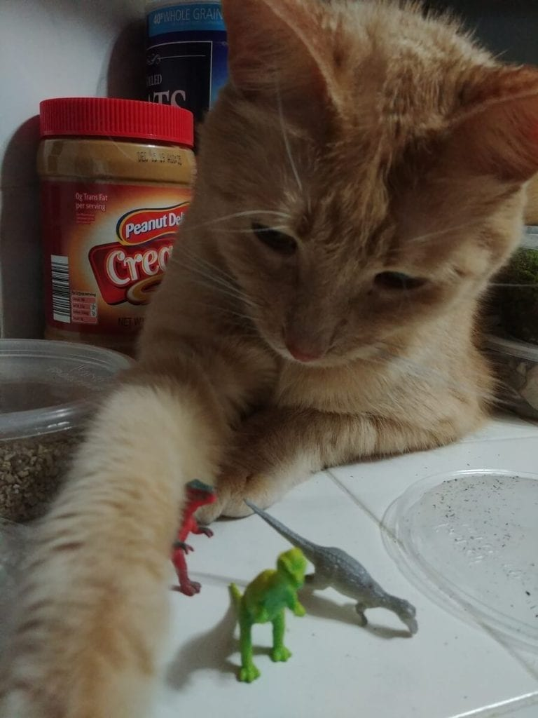 Cat Playing with Succulent Decorations