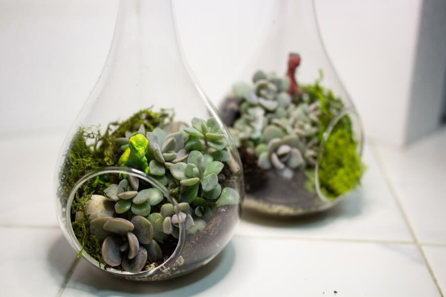 Mini Succulent Globes with Decorations