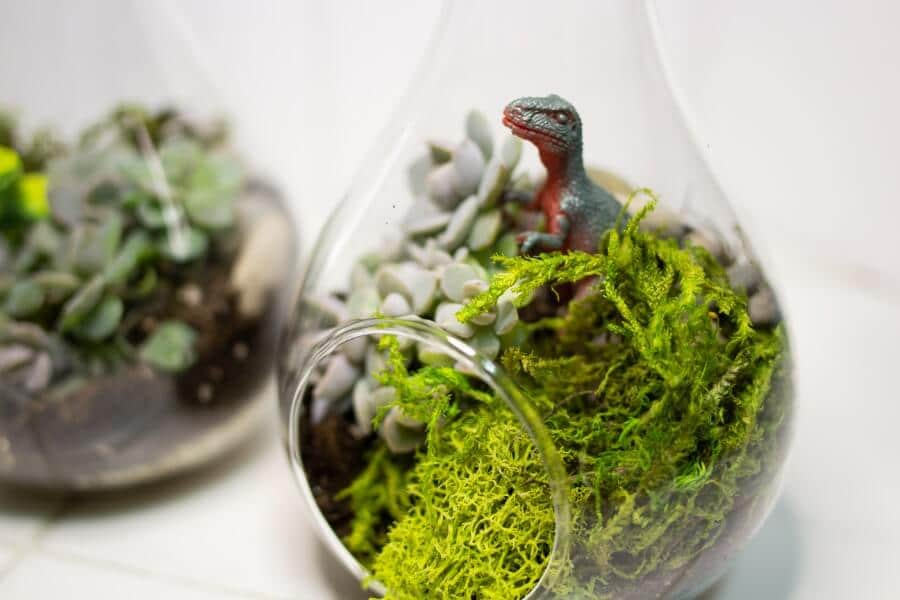 Pebbles and Moss in Mini Succulent Globes