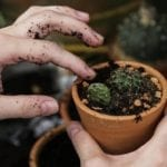 Aerate Soil in Potted Plant