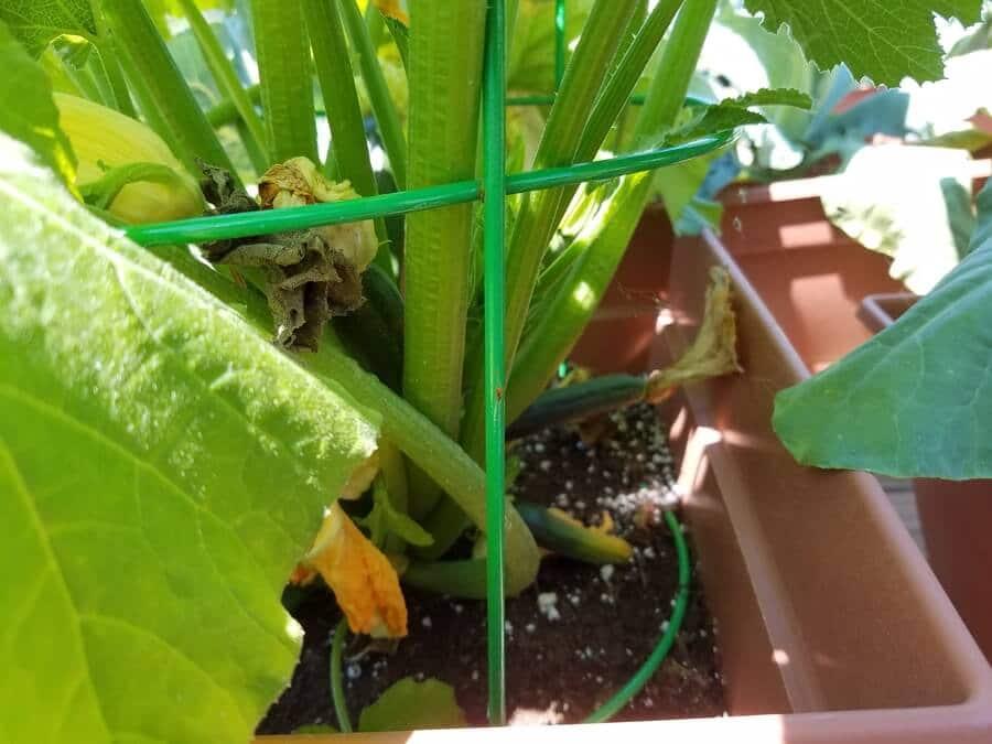 Growing Vegetables with Perlite or Vermiculite