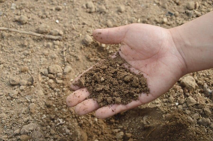 Old Garden Soil