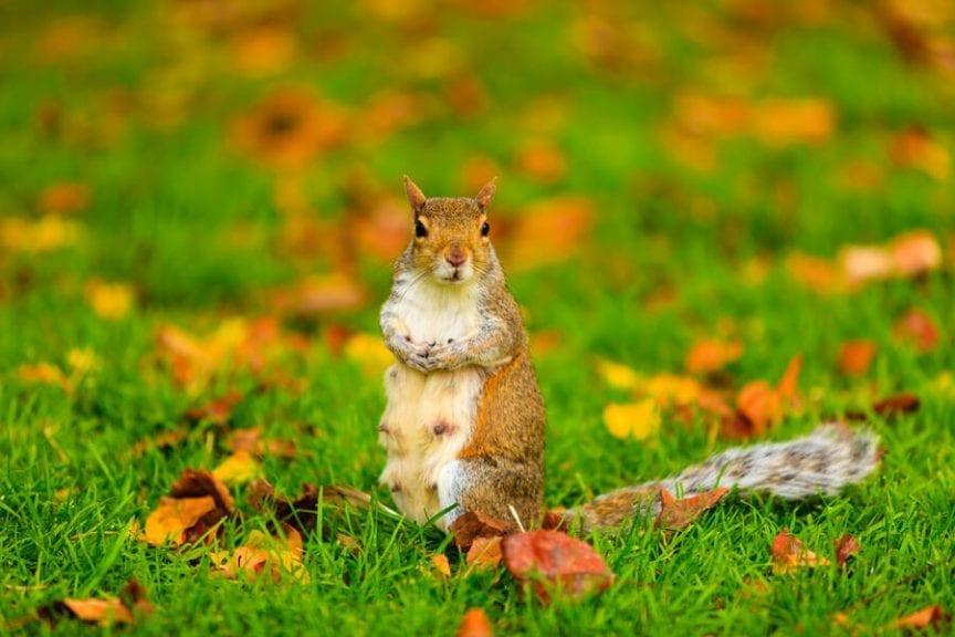 Squirrel in Yard