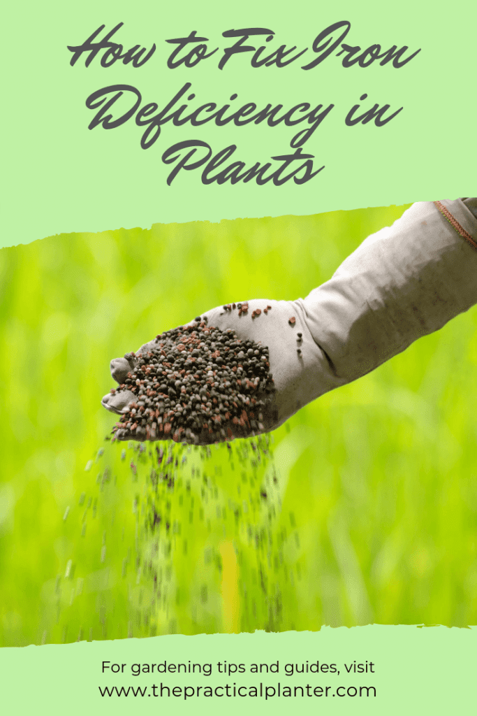 How to Fix Iron Deficiency in Plants (Symptoms and Treatment Methods)