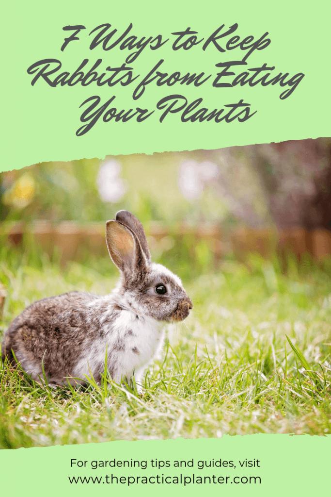 How to Keep Rabbits from Eating Your Plants (7 Effective Methods)