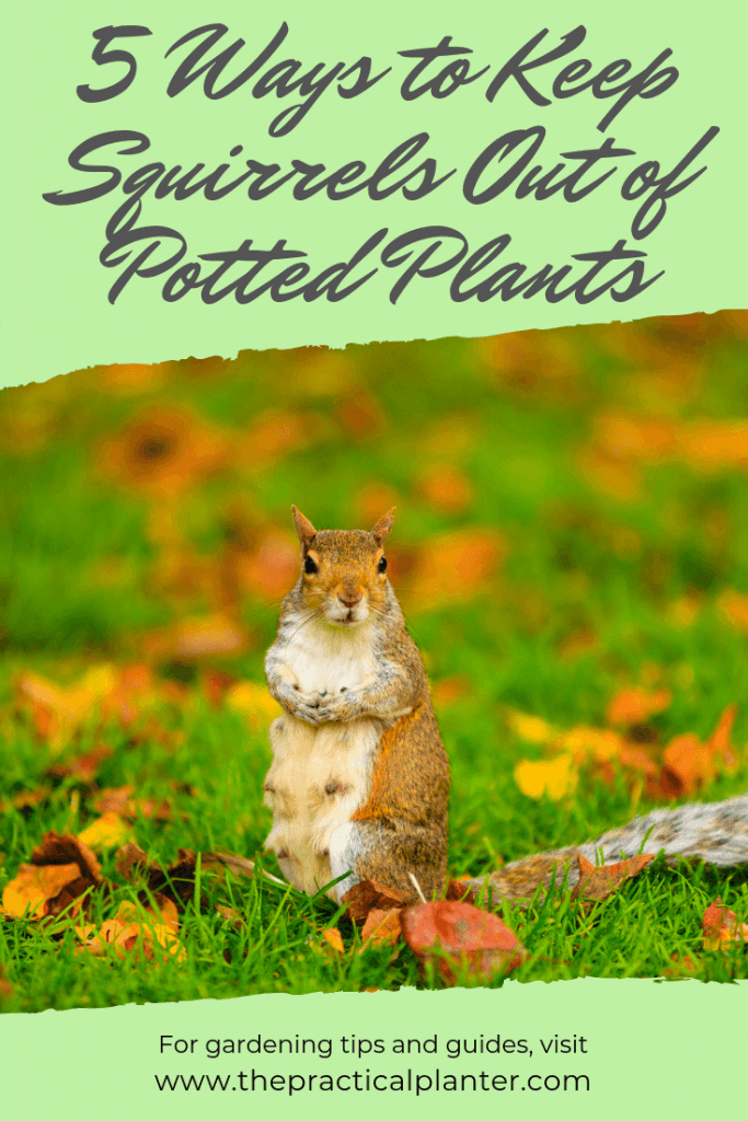 How to Keep Squirrels Out of Potted Plants (5 Techniques to Try at Home)
