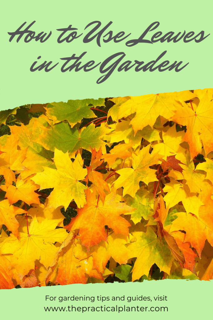 Are Leaves Good for The Garden?