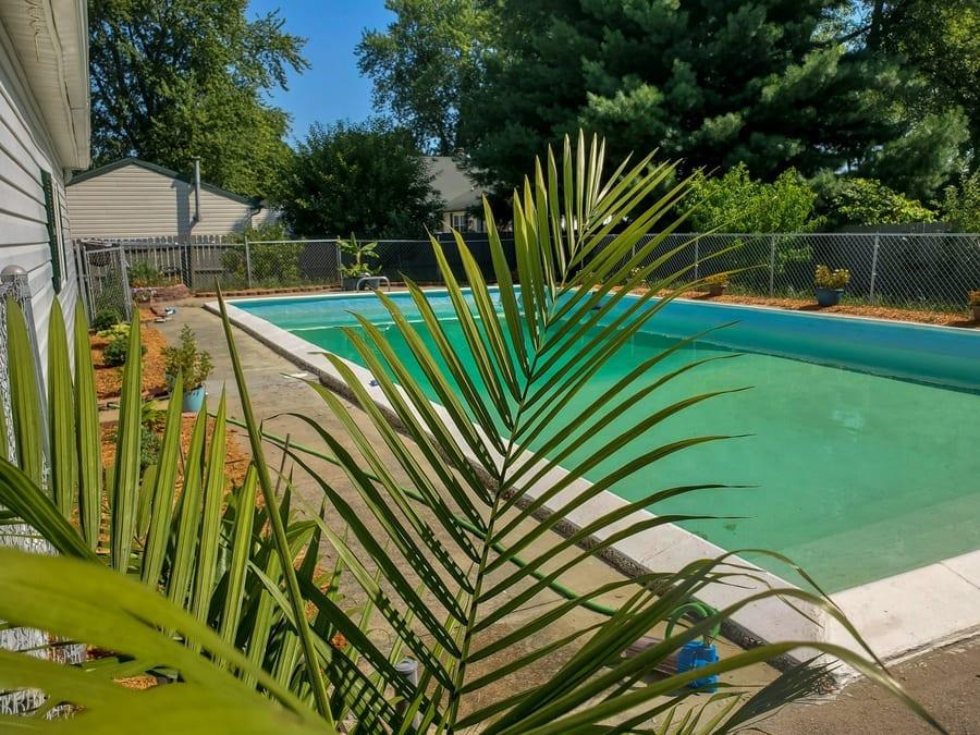 Majesty Palm Tree by Pool