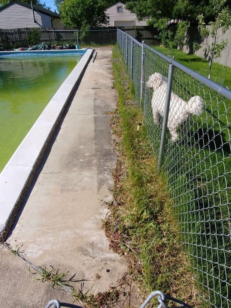 Pool-before 2