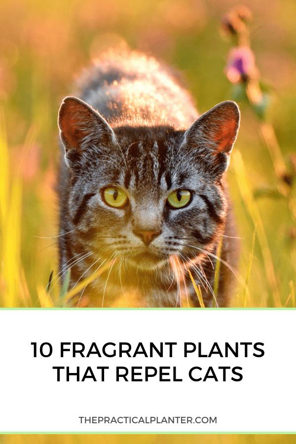 10 Fragrant Plants That Repel Cats