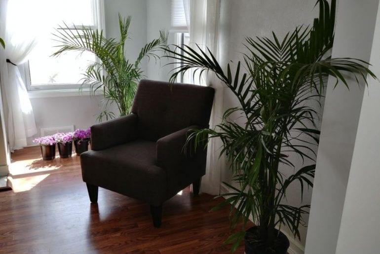 Majesty Palms